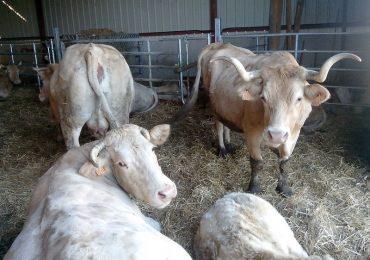 La Route de la Bio Poly-élevage à Labastide