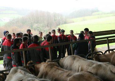 Contention avec la MSA : vaches et brebis