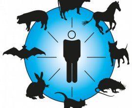 Les zoonoses par la MSA