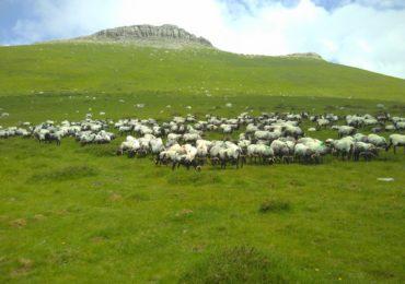 Séjour «pastoralisme» : Larrau et Iraty