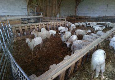 Un élevage en Bio à Hasparren : Makolatea