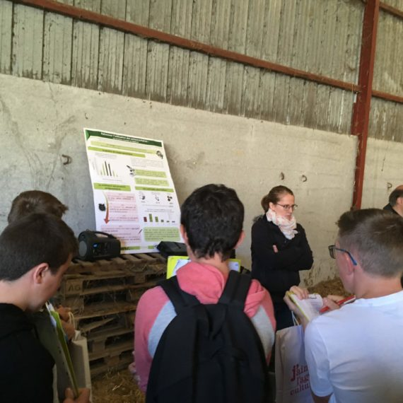 Assises ovines à St Just Ibarre