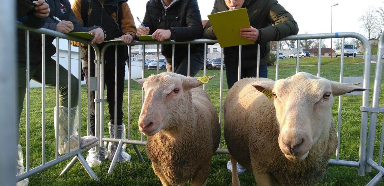 Concours de jugement de bétail : nos anciens se mettent en avant !