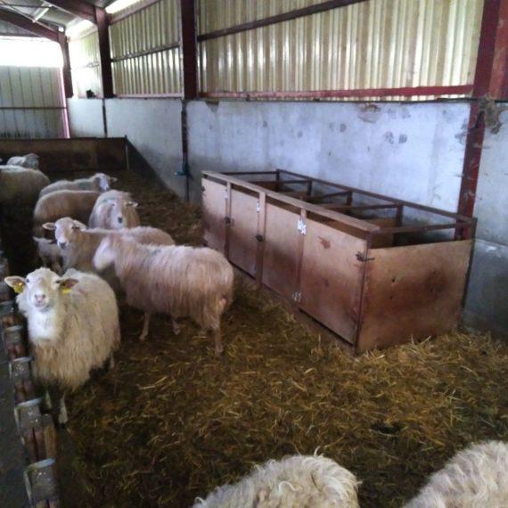 Organiser son agnelage, à Ossès