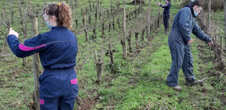 Atelier vigne pour les 1ère CGEA