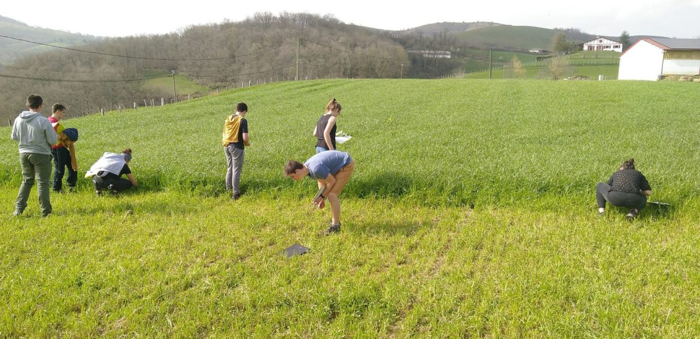 Reconnaissance de plantes à Jaxu